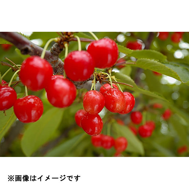 [横手市増田町産]紅秀峰800g(バラ400g×2)秀2LCH-7の商品画像